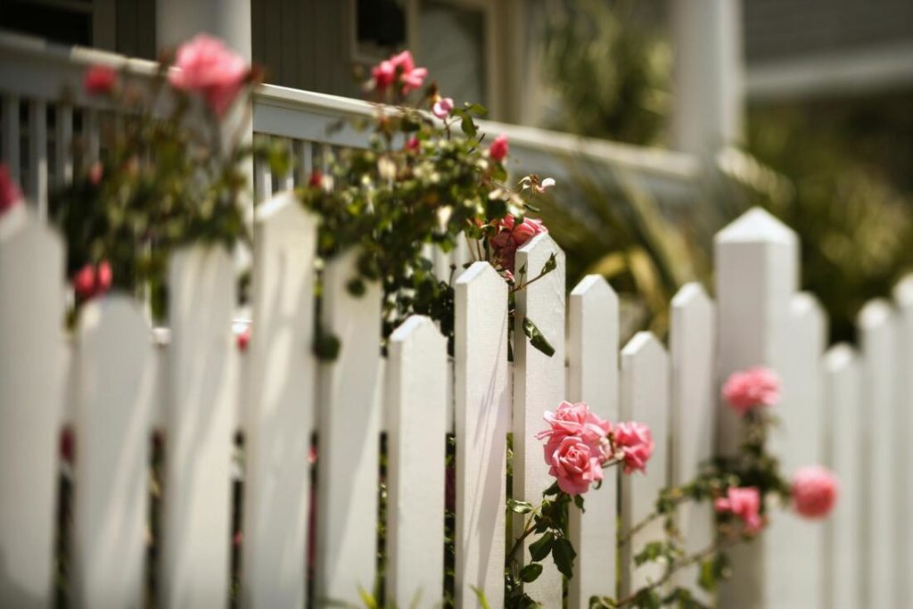 A picture of a white fence with pink flowers growing through it